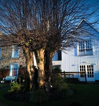 The Lime Tree in Fort William is a Small Hotel, Restaurant and high quality Art Gallery offering you unique accommodation in a convenient location ...