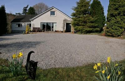 Medium house front spring 1k