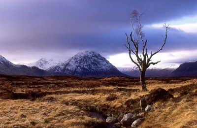 autumn_in_glencoe.jpg