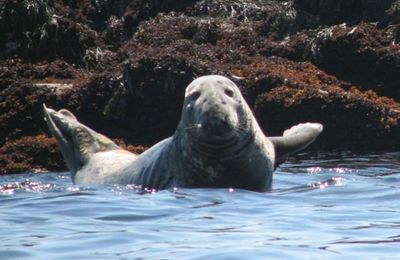 "Seals always say ""Hello !"""