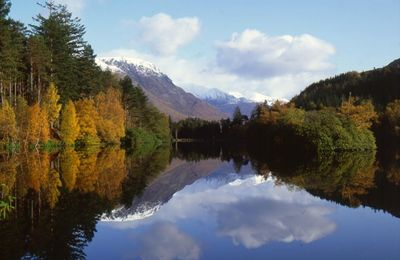 Forestry Lochan, Glencoe