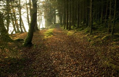 Forest paths near Gairlochy