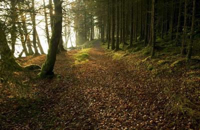 Forest paths near Gairlochy