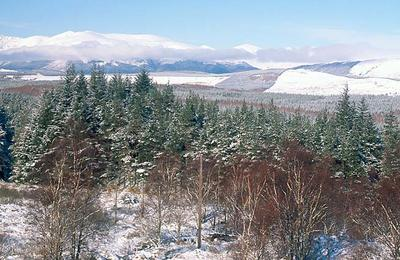 A winter Gondola view