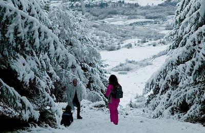 Leannachan Forest