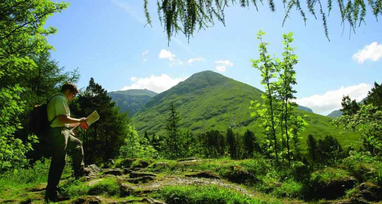 Guided woodland walks