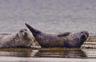 Chilled out seals